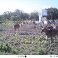 Trail Cameras at Agua Vida Ranch